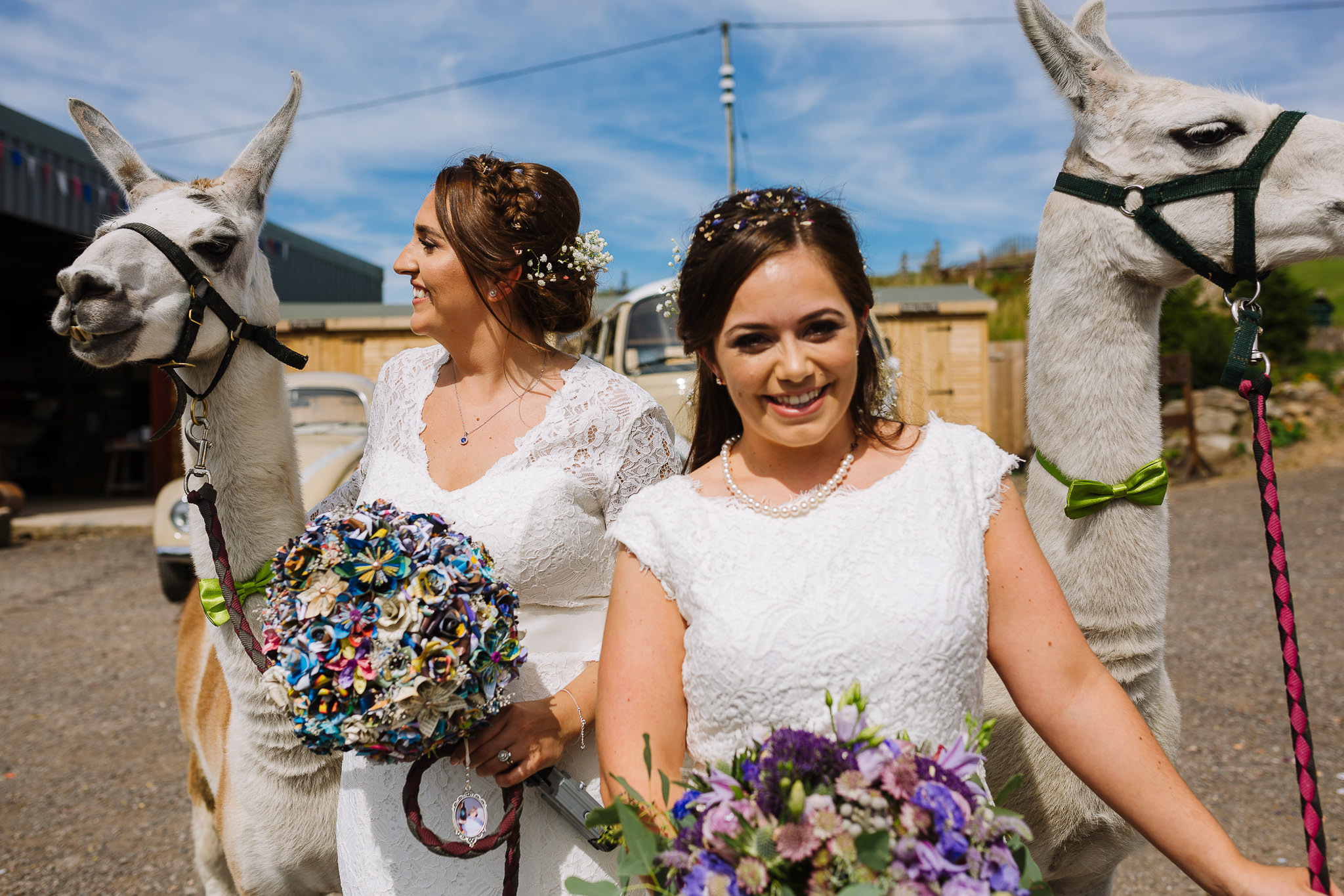 same sex couple take llamas for a walk at bolton quirky wedding venue
