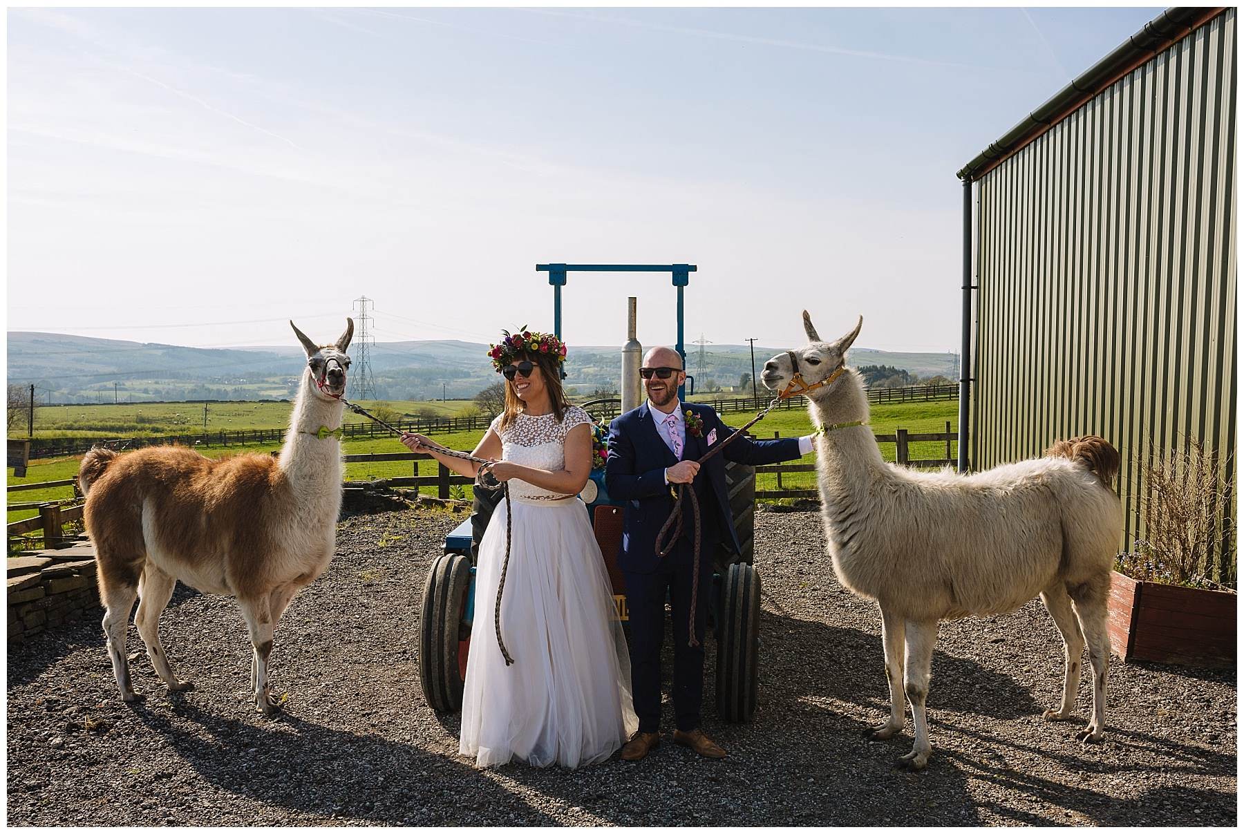 Bride and groom and llamas at the wellbeing farm